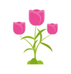tulip flower romantic plant vector image