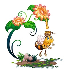 Bee collecting honey from the flower vector image