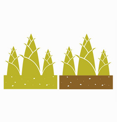 Bamboo shoot plant vector