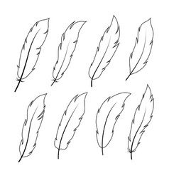 bird feathers set collection vector image vector image