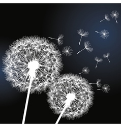 Black background with white dandelions vector image vector image
