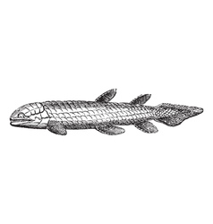 Bone Scale fish engraved vector