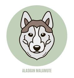 portrait of alaskan malamute vector image