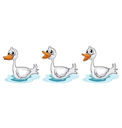 Smiling ducks vector image