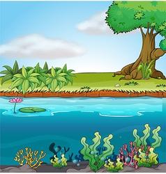 Land and aquatic environment vector image vector image