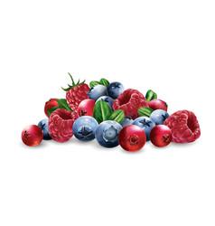 Raspberries cranberries blueberries and vector