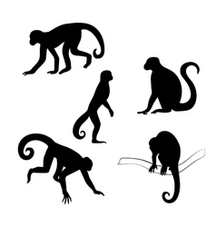 Capuchin monkey silhouettes vector image vector image