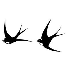 swallows birds vector image vector image