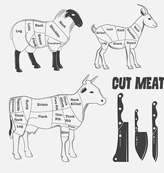 British cuts of lamb veal beef goat or Animal vector image