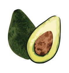 Fresh avocaddos vegetables healthy icons vector