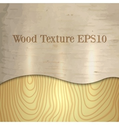 Light wood birch texture vector