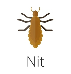 Nit skin parasite insect bug vector