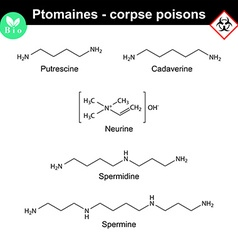 Ptomaines chemical formulas vector