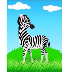 Zebra in the wild vector