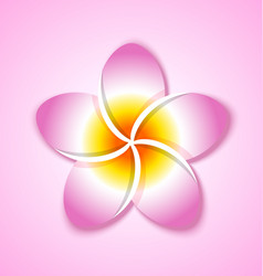 colorful plumeria flower placed on pink background vector image