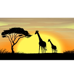 Giraffe in a beautiful nature vector image