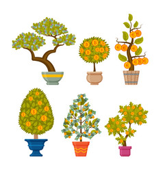 Money tree set decorative plants in flower pots vector