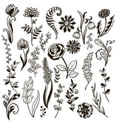 plants doodle herbs flowers vector image