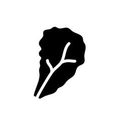 Lettuce icon vector