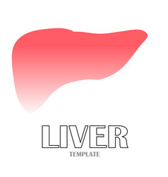 linear stylized drawing of liver vector image