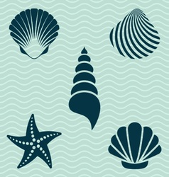 Sea shells vector image vector image