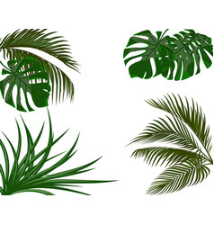 Green leaves of tropical palm trees monstera vector