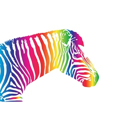 image of an zebra head vector image