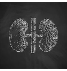 Kidneys icon vector