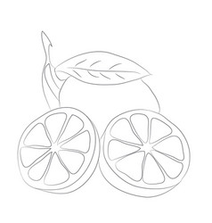 vegetables and fruits drawing lines vector image
