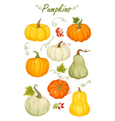 cartoon autumn pumpkins vector image