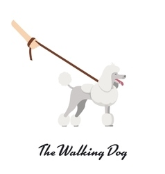 Color of the dog white Grand Poodle breed vector