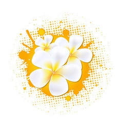 Flower Background With Frangipani vector image
