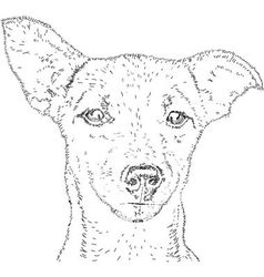 Line drawing dog vector