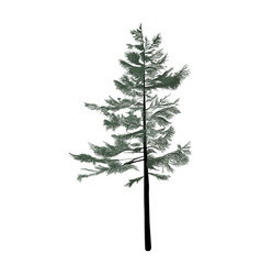 pine-tree isolated on white background vector image