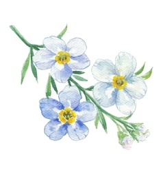 Branch of blue forget-me-not vector image