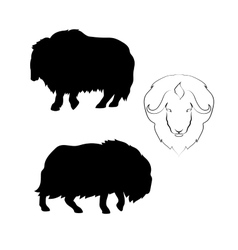 Musk-ox silhouettes vector image vector image