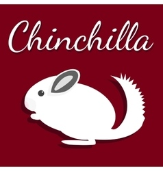 Chinchilla Pet icon in flat vector