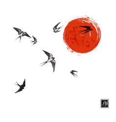 flying swallow birds and big red sun on white vector image