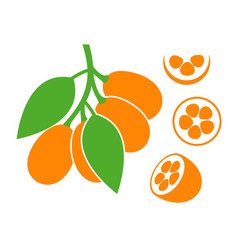 Kumquat vector