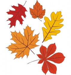 collection of autumn leave shapes vector image vector image