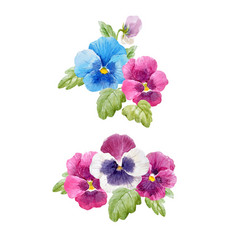 watercolor pansy flower set vector image vector image