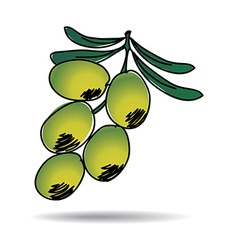 Freehand drawing olive icon vector
