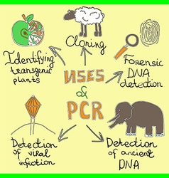 uses of pcr handdrawn vector image vector image