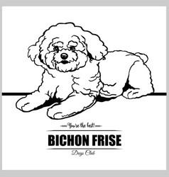Bichon frise dog - for t-shirt vector