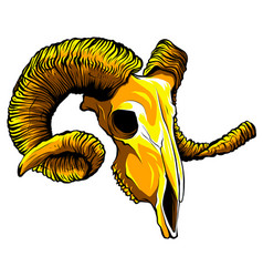 gold aries skull on white background vector image