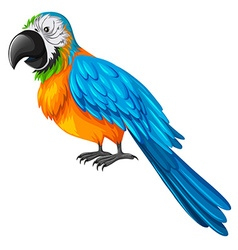 Parrot with yellow and blue feather vector image