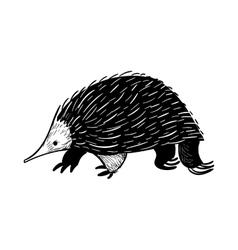 Australian animal Echidna in doodle style vector image