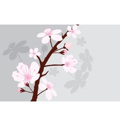 cherry branch vector image