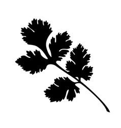 Coriander silhouette vector