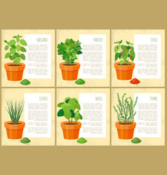 mint and parsley collection vector image